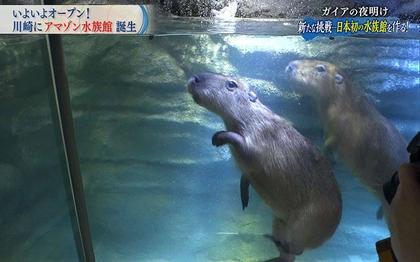 日本初!「カワスイ 川崎水族館」ができるまで...独占密着200日:ガイアの夜明け