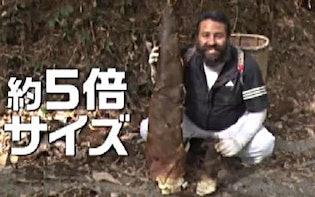 ある時は洞窟で寝泊まり、またある時は温泉掃除&たけのこ掘り・・・YOUは何者!?:YOUは何しに日本へ?