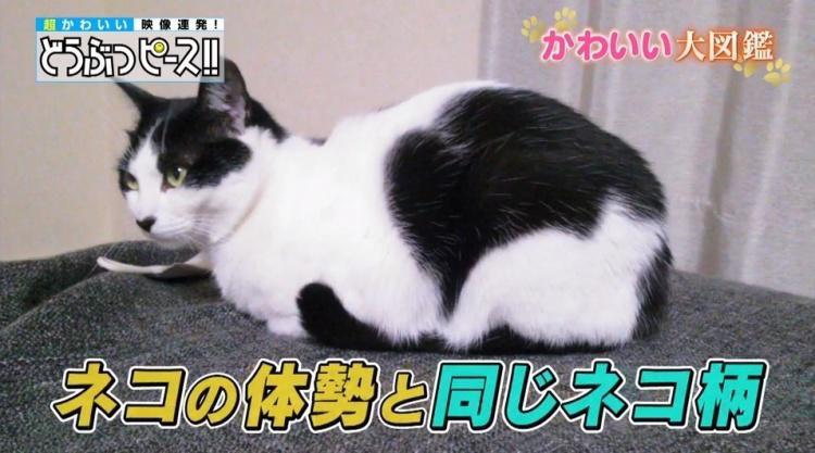 db_neko_20180704_05.jpg