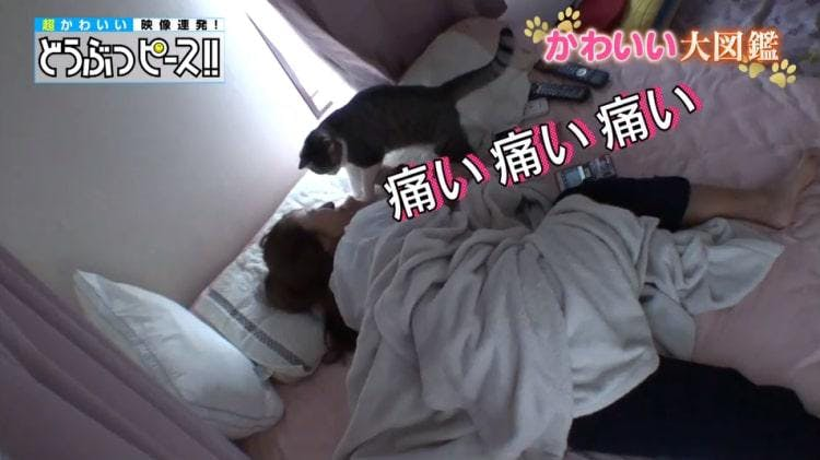 db_neko_20190130_03.jpg