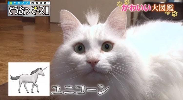 db_neko_20190130_05.jpg