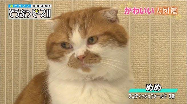 dp_cat_0123_01.jpg