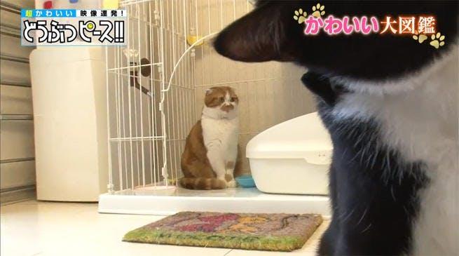 dp_cat_0123_02.jpg