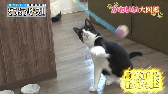 dp_cat_0123_03.jpg