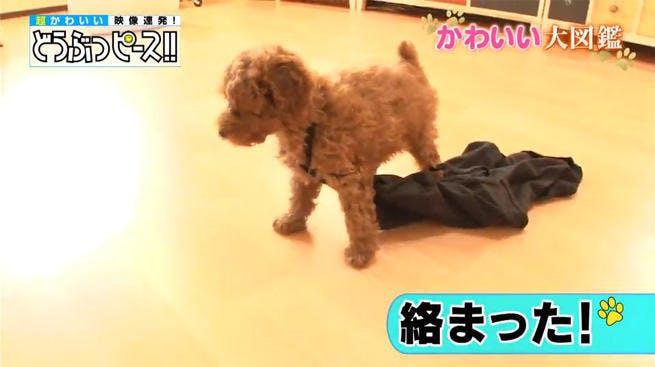 dp_dog_0123_01.jpg
