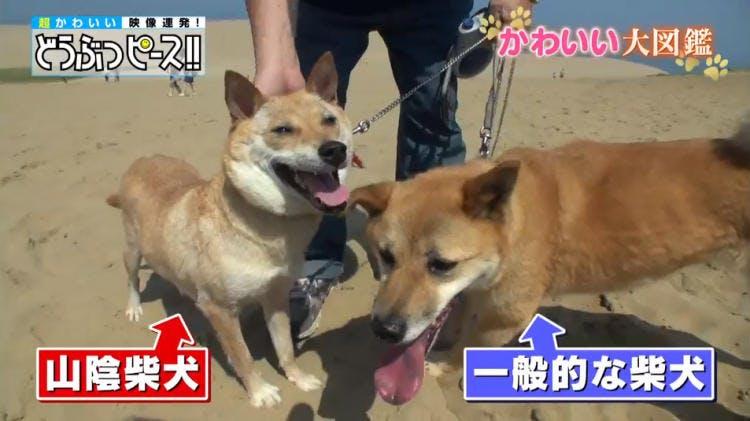 dp_inu_20190124_01.jpg