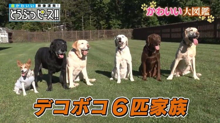 dp_inu_20190807_01.jpg