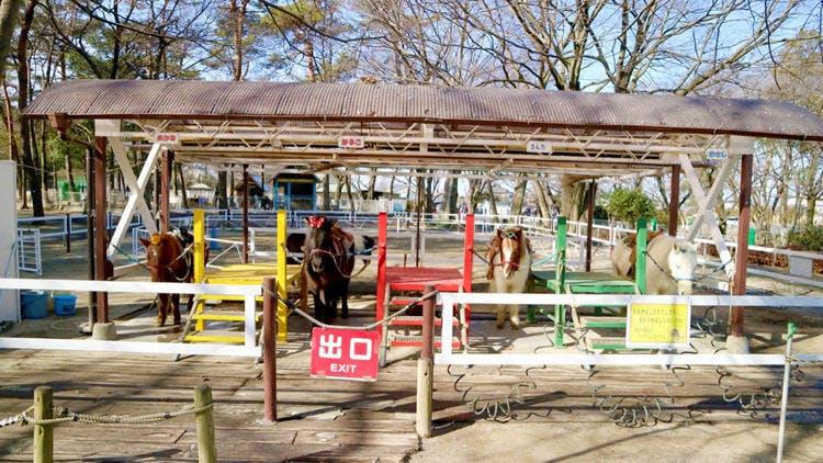saitama_20190224_12.jpg