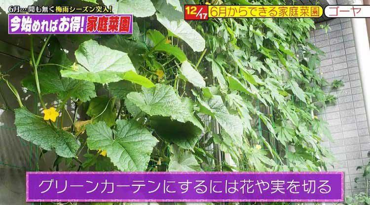 takizawakaren_20200609_04.jpg