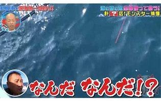 激ウマ<青い目を持つ巨大ザメ>は釣れるのか! 深海魚界の若き異端児が相模湾に挑む