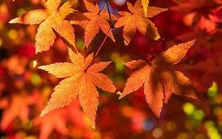 近い将来、紅葉が楽しめなくなる!? 気象予報士に聞いた、美しい桜や紅葉を今のうちに見ておくべき理由