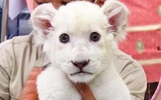 癒し度100%!日本全国の動物園でうまれた赤ちゃんの可愛い映像が盛り沢山!:今年うまれた動物園の赤ちゃん全部見る計画
