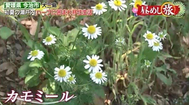 hirumeshi_20190623_04.jpg