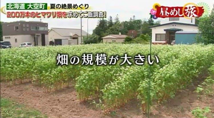 hirumeshi_20190825_02.jpg