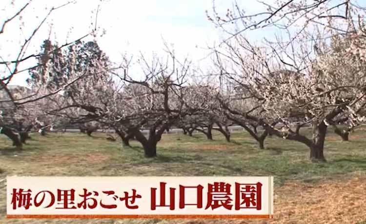 hirumeshi_20210404_06.jpg