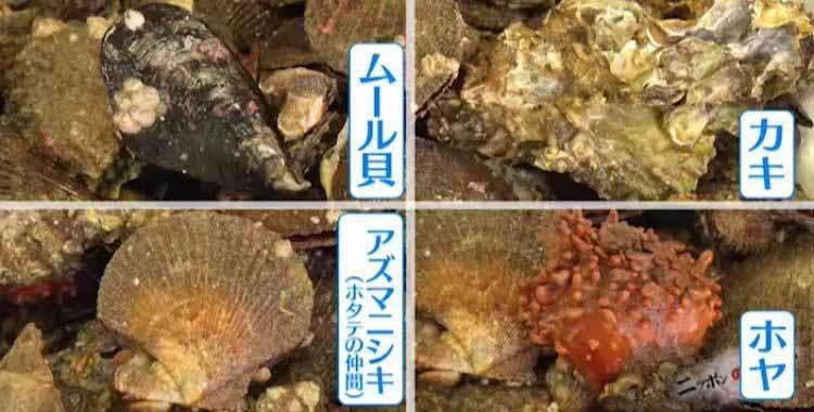 mikata_20201009_04.jpg