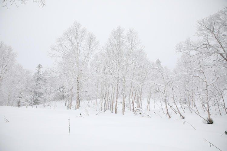 Hokkaido_20190124_14.jpg